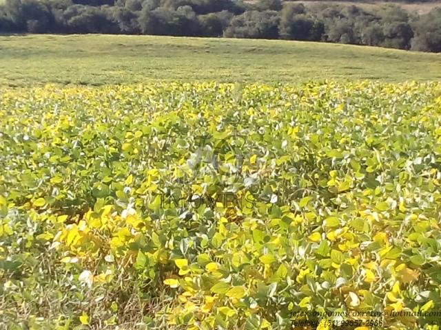 Excelente área para soja com 52,5 hectares